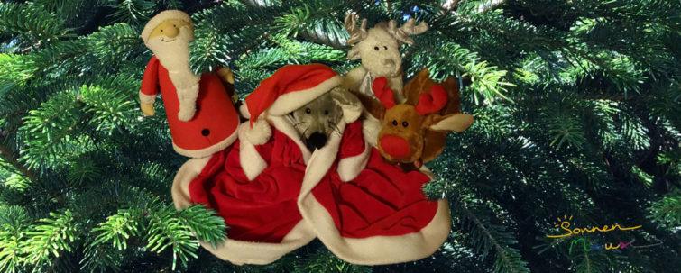 Weihnachten mit Milli